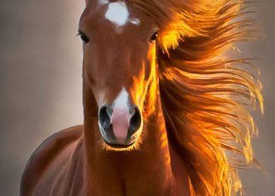 رمزية صور حيوانات