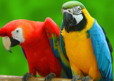 موقع عالم الصور صور طيور