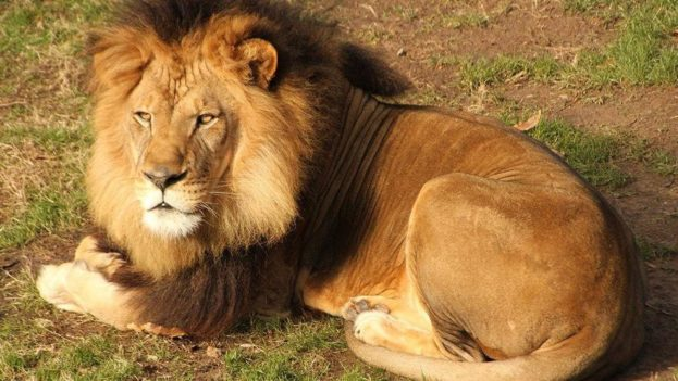Lion photos - Photos de lions gratuites ...