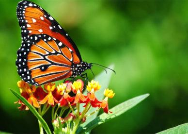 رمزية-صور-حشرات