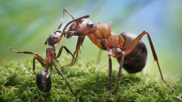 أجمل خلفية صور نملة تغذي صغيرها Ant Wallpaper Pictures عالم الصور