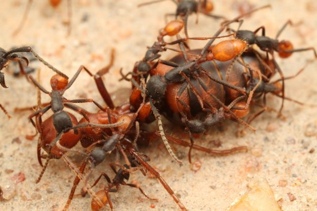 تحميل صور ملكة النمل Ant Queen Pictures -عالم الصور