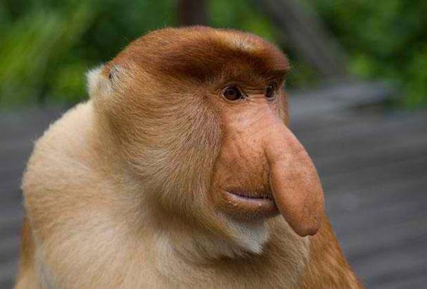 أجمل صور غرائب وعجائب حيوانات القرود-عالم الصور