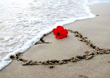صور قلب حب ووردة عشق على رمل البحر -عالم الصور