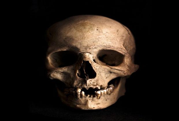 صور جمجمة أنسان تخوف Human Skull Horror Photo عالم الصور