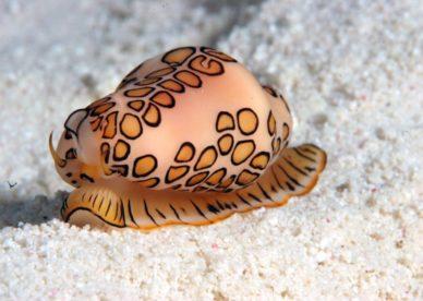 صور كائنات ومخلوقات عجيبة في أعماق البحر-عالم الصور