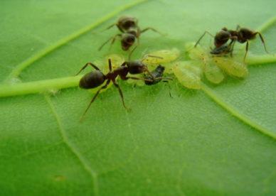 سبحان الله صور النمل الأسود يتغذى على الحشرات Black Ants Images- عالم الصور