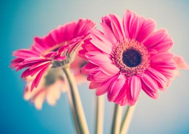 احلى صور ورد جميل Beautiful Flowers Photos - عالم الصور - عالم الصور