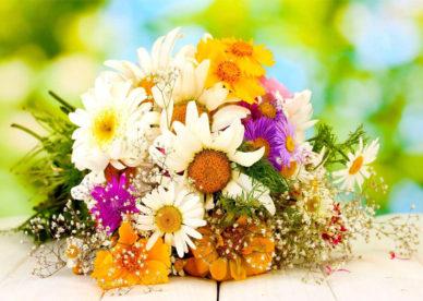 احلى صور زهور وورود منوعة-عالم الصور