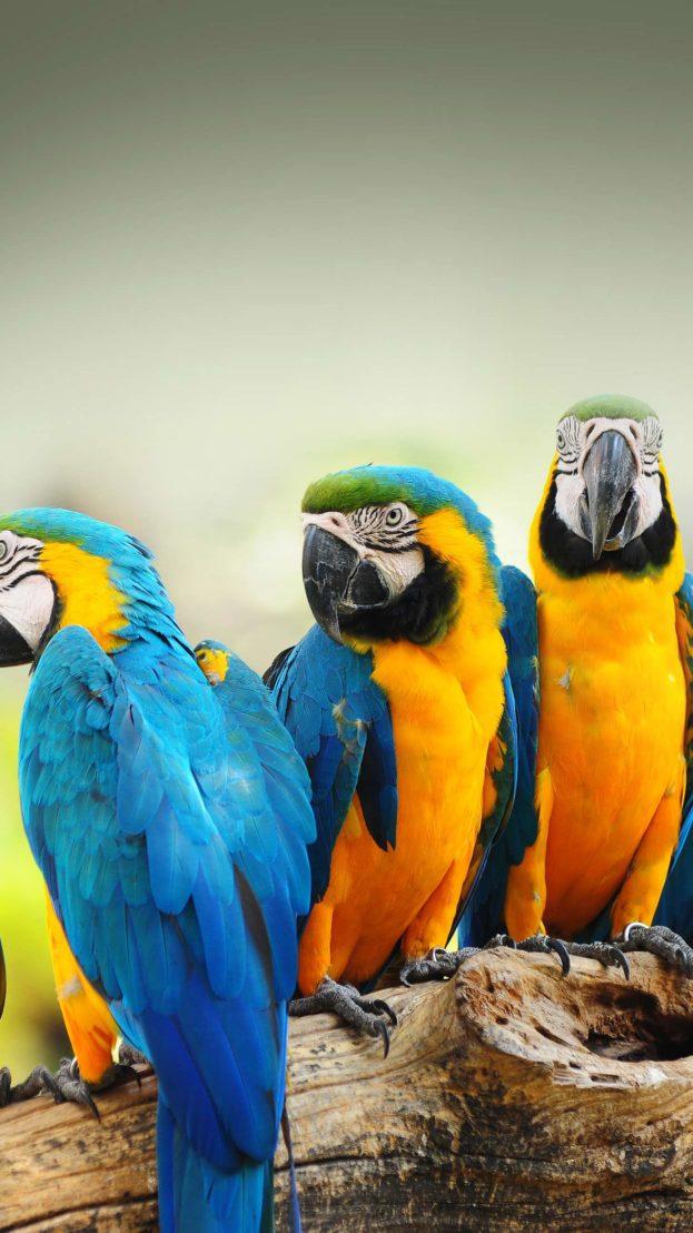 افضل صور خلفيات ايفون 6 بلس عالية الدقة Hd عالم الصور