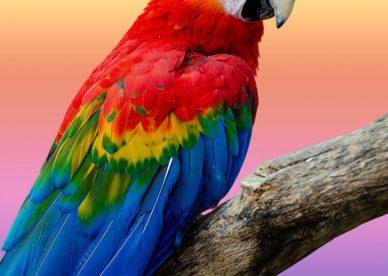 صور أجمل طيور ببغاء في العالم 2018-عالم الصور