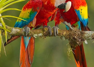 صور ببغاوات حلوه ملونة 2018 أجمل الوان الببغاء الذكية المتكلمة-عالم الصور