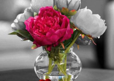 صور ورود الحب Rose Flower Love-عالم الصور