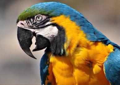 صور اجمل واذكى ببغاء المكاو Macaw Parrots-عالم الصور