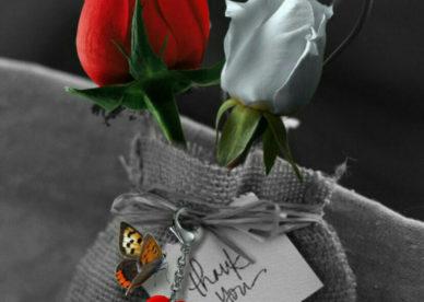 صور ورد جميل حب وأحلى صور أزهار رومانسية جديدة-عالم الصور