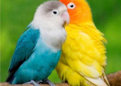 صور طيور الببغاء الصغيرة الملونة جديدة Small Baby Parrots-عالم الصور