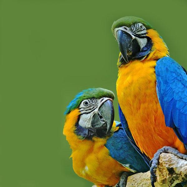 صور اجمل انواع طيور ببغاوات -عالم الصور
