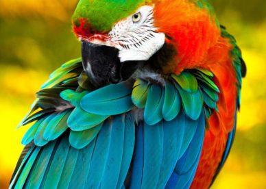 طيور ببغاء بالصور للتحميل-عالم الصور