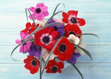 صور خلفيات ورد جديدة أحلى وأجمل خلفيات الورود روعة-عالم الصور