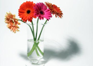 صور خلفيات شاشة أجمل ورد-عالم الصور