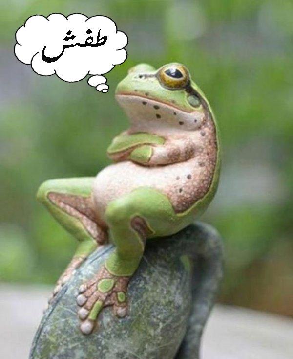 صور مضحكة على الفيس بوك - عالم الصور